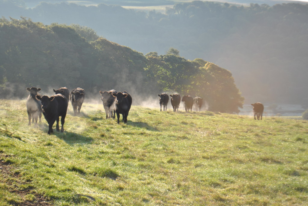 woodland and cattle
